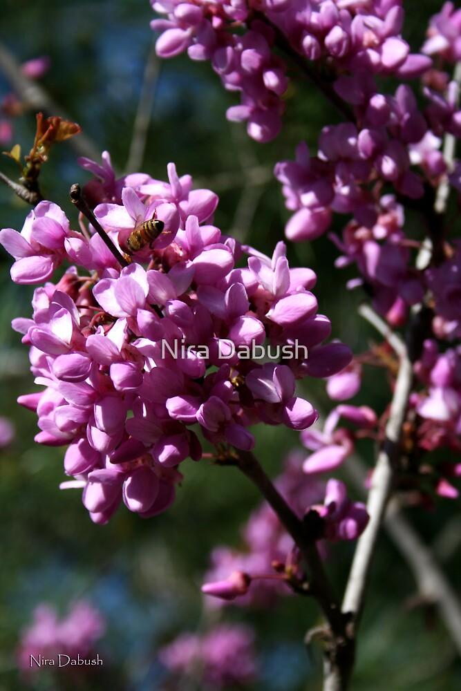 As Pinkish as a Tree Can Be by Nira Dabush