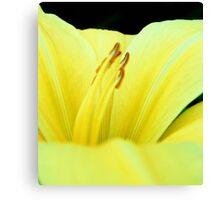 Primary Yellow Canvas Print