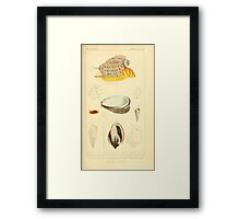 The Animal Kingdom by Georges Cuvier, PA Latreille, and Henry McMurtrie 1834  245 - Mollusca Mollusks Framed Print