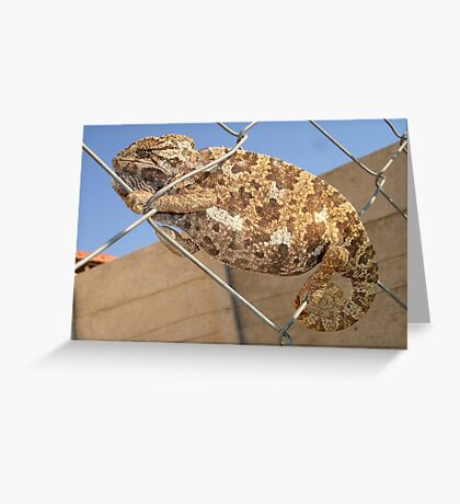 Chameleon In Shades of Brown on Fence Greeting Card