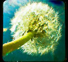 Dandelion TTV by Sarah Lipow