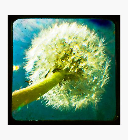 Dandelion TTV Photographic Print