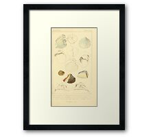 The Animal Kingdom by Georges Cuvier, PA Latreille, and Henry McMurtrie 1834  266 - Mollusca Mollusks Framed Print