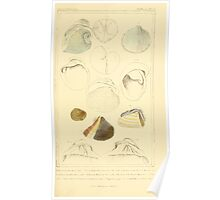 The Animal Kingdom by Georges Cuvier, PA Latreille, and Henry McMurtrie 1834  266 - Mollusca Mollusks Poster