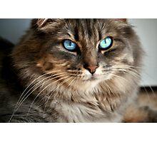 Beautiful Blue Eyes Tabby Photographic Print