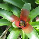 Costa Rican Bloom by deepstarr7020