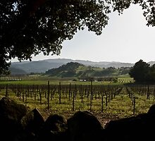 Evening haze and shadows in Napa Valley by MarkEmmerson