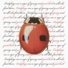 Ladybug Luck by Zehda