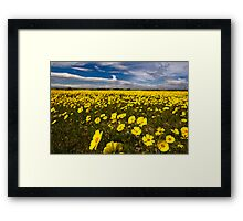 YELLOW Wildfowers in Lancaster Framed Print