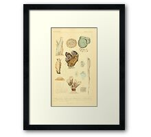 The Animal Kingdom by Georges Cuvier, PA Latreille, and Henry McMurtrie 1834  285 - Mollusca Mollusks Framed Print