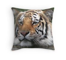 Siberian Tiger On a Hot Day Throw Pillow