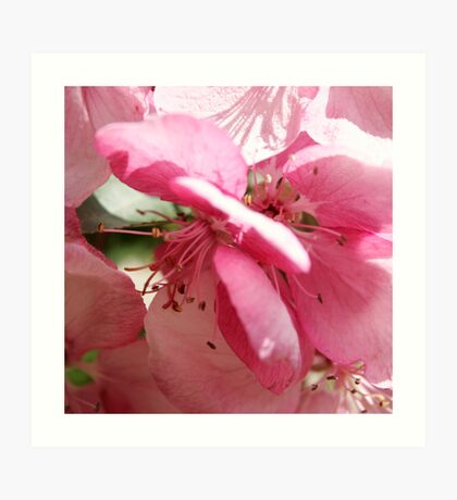 Macro in Pink Art Print