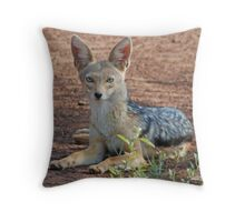 Black-Backed Jackal, Serengeti National Park, Tanzania Throw Pillow