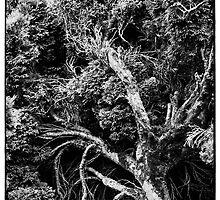 Black and white botany - 1 by Mikhail Palinchak