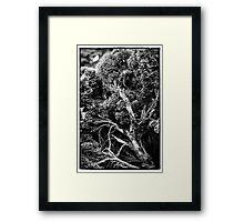 Black and white botany - 1 Framed Print