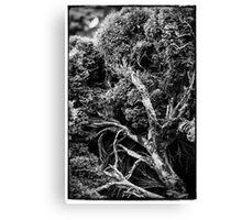 Black and white botany - 1 Canvas Print