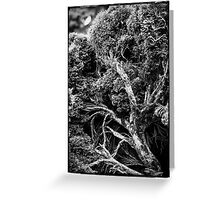 Black and white botany - 1 Greeting Card