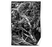 Black and white botany - 1 Poster