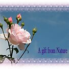 A gift from Nature by Rosalie Scanlon