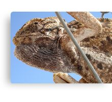 Close Up Of A Climbing Chameleon Canvas Print