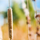 Corn Dog Anyone?? by Mark van den Hoek