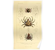 The Animal Kingdom by Georges Cuvier, PA Latreille, and Henry McMurtrie 1834  323 - Crustacea Crustaeans Poster