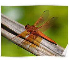 Lacewing Dragonfly Poster