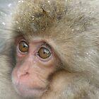 Snow Monkey  by Kellie Scott