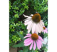 nectarine Photographic Print