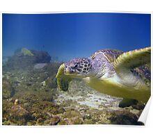 Turtle Glide Poster
