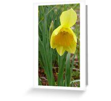 Daffodil. Greeting Card