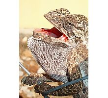A Chameleon With Open Mouth Photographic Print