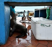 Begging Galapagos Sea Lion by Catherine Sherman