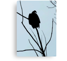 Vulture On The Watch Canvas Print