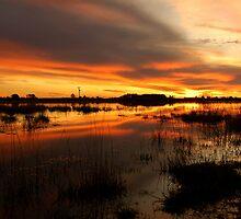 Golden Pond  by MattTworkowski