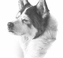 black & white dog drawing by Mike Theuer
