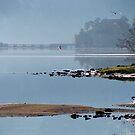 Peaceful Morning Flight by Jan Landers