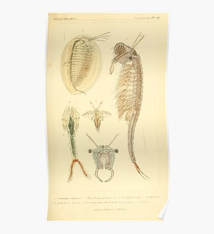 The Animal Kingdom by Georges Cuvier, PA Latreille, and Henry McMurtrie 1834  356 - Crustacea Crustaeans Poster