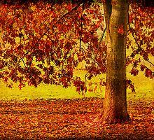 End of Autumn by Angie Muccillo