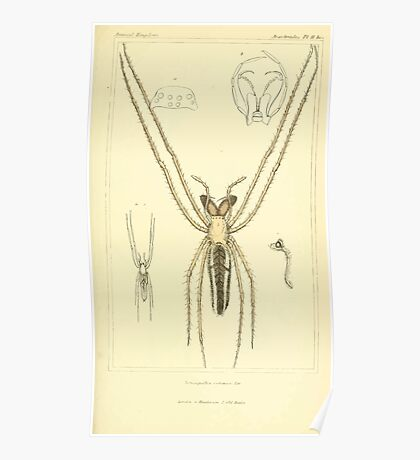 The Animal Kingdom by Georges Cuvier, PA Latreille, and Henry McMurtrie 1834  379 - Arachnides Arachnids Poster