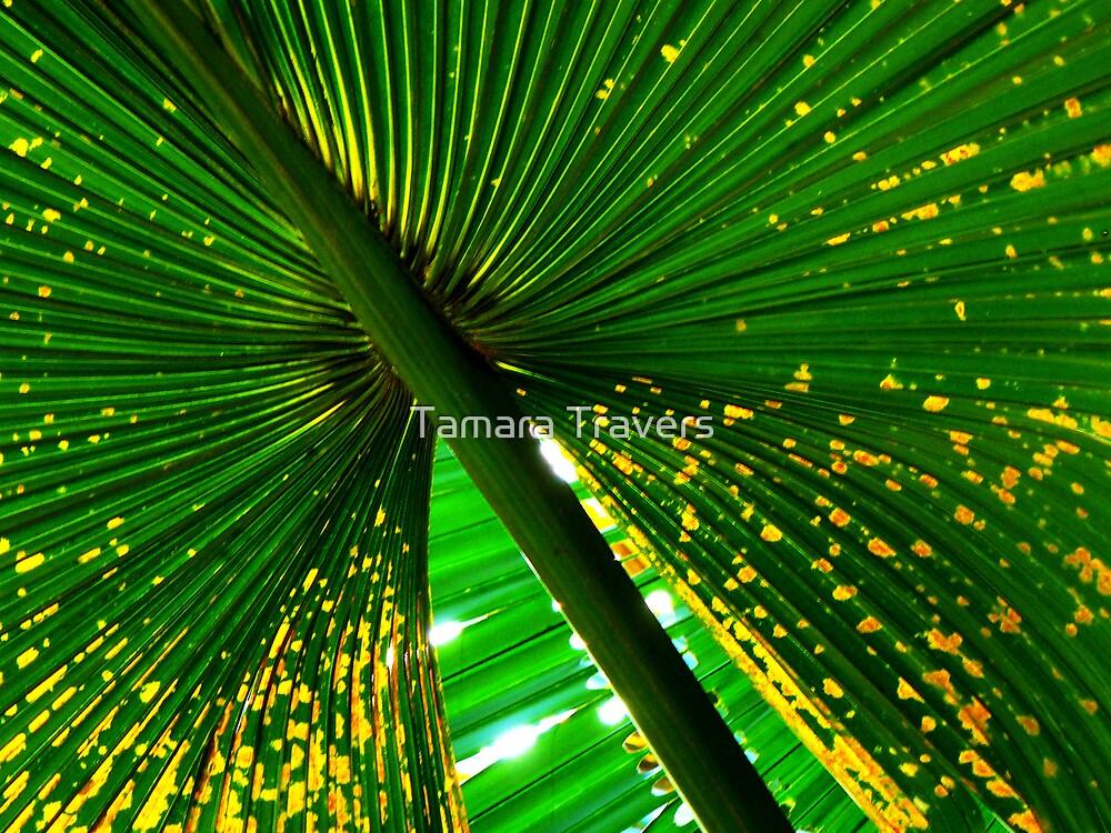 Under the Umbrella... by Tamara Travers