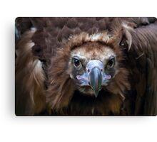 Vulture Culture Canvas Print