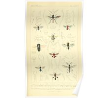 The Animal Kingdom by Georges Cuvier, PA Latreille, and Henry McMurtrie 1834  492 - Insecta Insects Poster