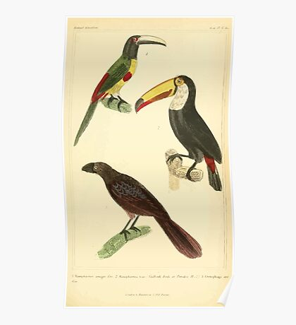 The Animal Kingdom by Georges Cuvier, PA Latreille, and Henry McMurtrie 1834 706 - Aves Avians Birds Poster