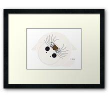Seal Framed Print