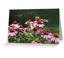 Echinacea and Swallowtail Greeting Card