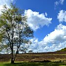 Spring clouds on the heath by jchanders