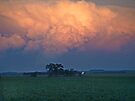 Storm Sky over Soybeans by Dawne Olson
