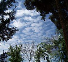 Sky in wood-frame by sabosha
