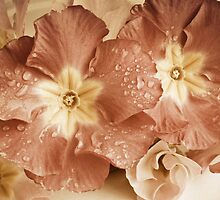 Primroses by Colleen Farrell